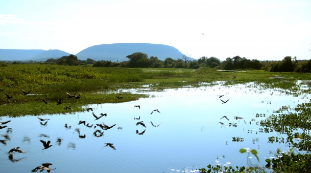 Pantanal poderá receber recursos do Fundo de Desenvolvimento da Amazônia